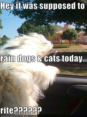 Hey it was supposed to rain dogs & cats today... rite??????
