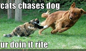 cats chases dog  ur doin it rite