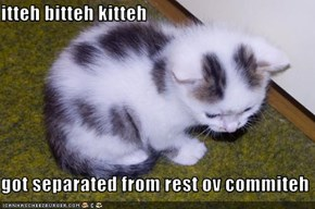 itteh bitteh kitteh  got separated from rest ov commiteh