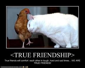 <TRUE FRIENDSHIP>