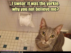 I swear, it was the yorkie,  why you not believe me?