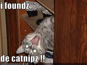 i foundz   de catnipz !!
