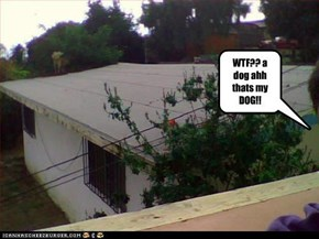 WTF?? a dog ahh thats my DOG!!