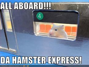 ALL ABOARD!!!  DA HAMSTER EXPRESS!