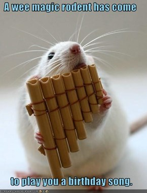 A wee magic rodent has come   to play you a birthday song.
