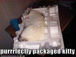 purrrfectly packaged kitty