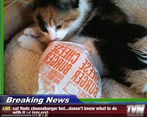 Breaking News - cat finds cheeseburger but...doesn't know what to do with it ;-( (cry,cry)
