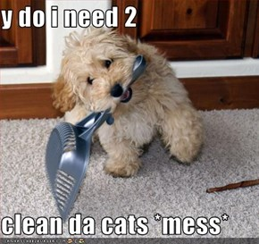 y do i need 2   clean da cats *mess*