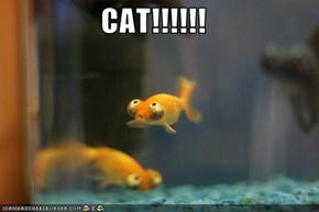 CAT!!!!!!