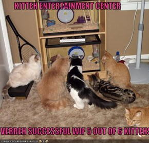 KITTEH ENTERTAINMENT CENTER  VERREH SUCCESSFUL WIF 5 OUT OF 6 KITTEHS