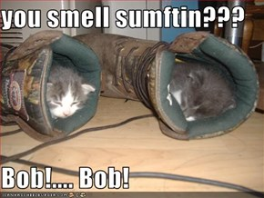 you smell sumftin???  Bob!.... Bob!
