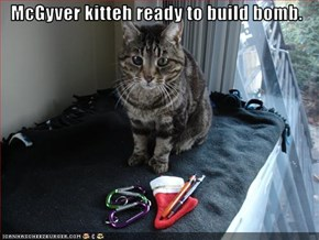 McGyver kitteh ready to build bomb.