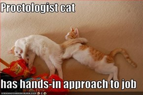 Proctologist cat  has hands-in approach to job