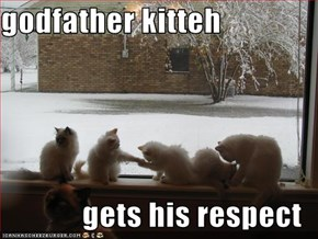 godfather kitteh  gets his respect
