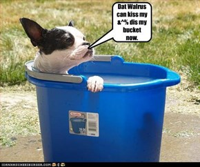 Dat Walrus can kiss my &^% dis my bucket now.