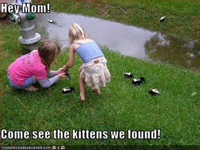 Hey Mom!  Come see the kittens we found!
