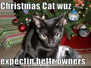 Christmas Cat wuz   expectin bettr owners