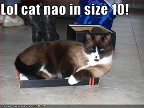 Lol cat nao in size 10!