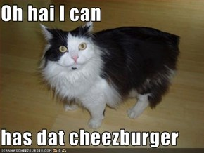 Oh hai I can  has dat cheezburger