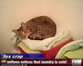 fox crap - mittens notices that laundry is cold!