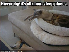 Hierarchy: it's all about sleep places.