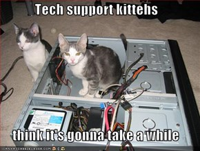 Tech support kittehs  think it's gonna take a while