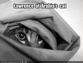 Lawrence  of  Arabia's  cat