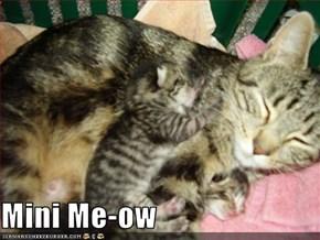 Mini Me-ow