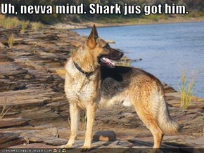 Uh, nevva mind. Shark jus got him.