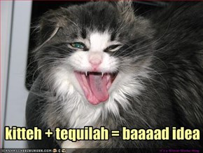 kitteh   tequilah = baaaad idea