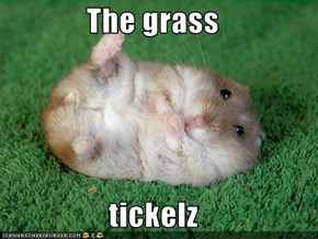 The grass  tickelz