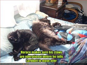 Horace makes sure his claws are operational before he tells Lardbutt to move over