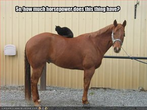 So, how much horsepower does this thing have?