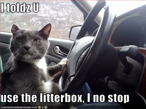 I toldz U  use the litterbox, I no stop