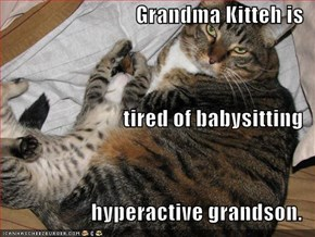 Grandma Kitteh is tired of babysitting hyperactive grandson.