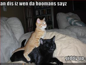 an dis iz wen da hoomans sayz   giddy up
