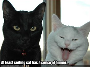 At least ceiling cat has a sense of humor...