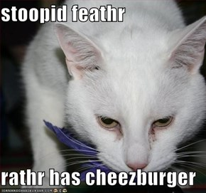 stoopid feathr   rathr has cheezburger
