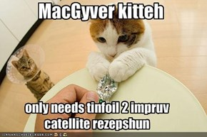 MacGyver kitteh