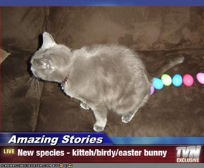 Amazing Stories - New species - kitteh/birdy/easter bunny