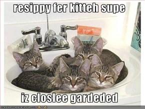 resippy fer kitteh supe  iz closlee gardeded