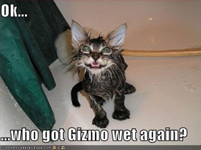 Ok...  ...who got Gizmo wet again?