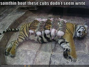 somthin bout these cubs dodn't seem write