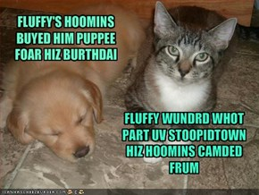 FLUFFY'S HOOMINS BUYED HIM PUPPEE FOAR HIZ BURTHDAI