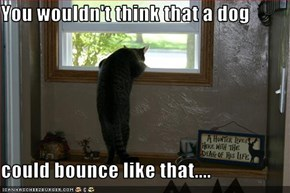 You wouldn't think that a dog   could bounce like that....