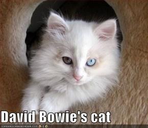 David Bowie's cat