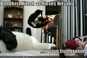 Buddhist Kitteh achieves Nirvana...  ...In your livingroom