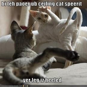 bi teh paoer ub ceiling cat speerit  yer leg iz heeled