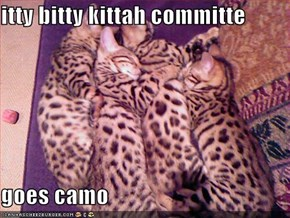 itty bitty kittah committe  goes camo