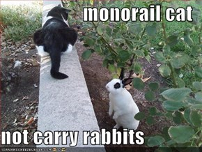 monorail cat  not carry rabbits